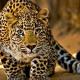 Felidae lovers