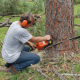 Tree Removal Melbourne - stumpsandtrees